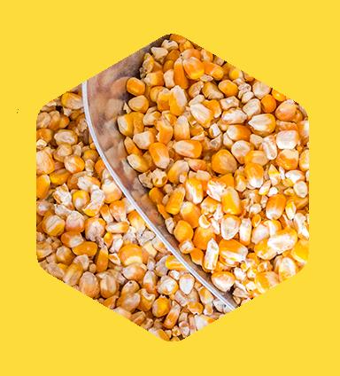 Produtos - Cereais